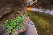 West Fork Oak Creek Canyon Posters - A Frogs Rest Poster by Peter Coskun