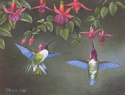 Bird Prints Paintings - A Fuchsia Moment by Michael Allen