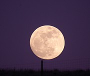 Full Moon Art - A Full Moon Behind My Fence by Jeff  Swan