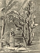 Dog Lover Drawings Framed Prints - A Garden in Florida 1872 Engraving by Harry Fenn Framed Print by Antique Engravings
