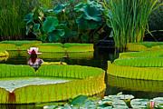 A Garden In Gentle Waters Print by Byron Varvarigos