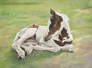 Paint Foal Metal Prints - A Gift Of Spring Metal Print by Helen Bailey