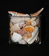 Glass Greeting Cards Prints Prints - A Glass Of Seashells Print by Ester  Rogers