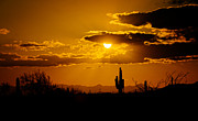 Saguaro Cactus Prints - A Golden Southwest Sunset  Print by Saija  Lehtonen