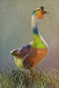 Tomas Images - A Goose Of Many Colors