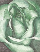Marriage Framed Prints Framed Prints - A Green Rose Framed Print by Margarett Beverly