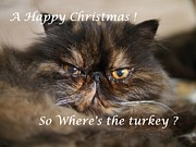 Tortie Posters - A Happy Christmas Poster by John Chatterley
