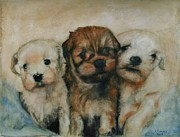 Havanese Paintings - A HaVa Dream by Angela Pistrucci