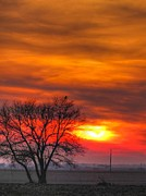 Landscape Photography Pastels - A Hawk Watches The Sunset by Jackie Novak
