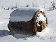 Winter Digital Photo Scene Posters - A Hay Bales Winter  Poster by Andrew Govan Dantzler