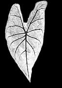 Sabrina L Ryan - A Heart in Nature