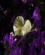 11th Green Photos - A Heart of Gold Leaf of Morning Glory by Tracey Harrington-Simpson