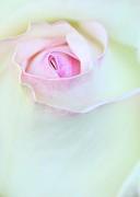 Sabrina L Ryan - A Hint of Pink