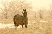 Rural Living Posters - A Horse In The Snow Poster by Jeff  Swan