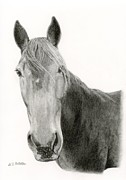 Barn Drawings Posters - A Horse Of Course Poster by Sarah Batalka