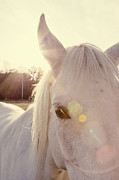 Sunflare Framed Prints - A Horses Eyes Framed Print by Erin Johnson