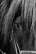 Kentucky Horse Park Photo Prints - A Kind Eye Print by Jak of Arts Photography