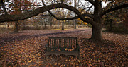 William  Doyle - A Leafy Bench