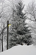 Blue Knob Photos - A Light Snow by Lois Bryan