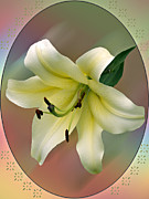 Judy  Johnson - A Lily for You....