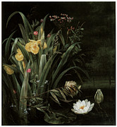 White Waterlily Paintings - A Lily Pond by Hermania Sigvardine Neergard