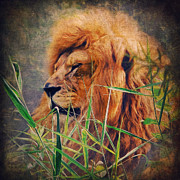 Animals Mixed Media Posters - A Lion Portrait Poster by Angela Doelling AD DESIGN Photo and PhotoArt