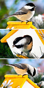 Ornamental Digital Art - A Little Bird Told Me - Three Chickadees Triptych by Christina Rollo