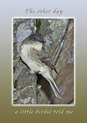 Michael Peychich - A little birdie told me note card