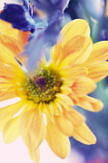 Floral Composition Photos - A Little Bit More Sun in the Cold Days by Jenny Rainbow