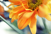 Floral Composition Photos - A Little Bit Sun in the Cold Days I by Jenny Rainbow