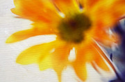 Floral Composition Photos - A Little Bit Sun in the Cold Days by Jenny Rainbow