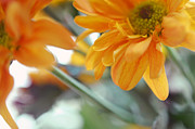 Floral Composition Photos - A Little Bit Sun in the Cold Time I by Jenny Rainbow