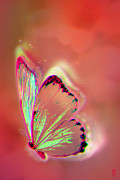 Saathoff Art Digital Art Originals - A little magic by Li   van Saathoff