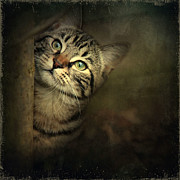 Cat Paw Digital Art Posters - A Little Shy Poster by Annie  Snel