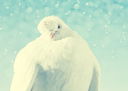 Pigeon Prints - A little winterdreams Print by Kristin Kreet