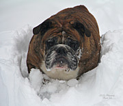 Winter Digital Photo Scene Posters - A Look Of Concern Poster by Jeanette C Landstrom