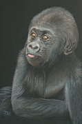 Protection Drawings Posters - A Look of Wonder - Baby Gorilla Poster by Jill Parry