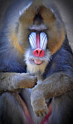 Jim Fitzpatrick - A Male Mandrill