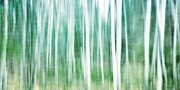 Green Forest Photos - A Matter Of Blues by Priska Wettstein