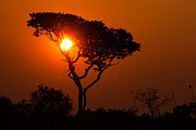 Geobob Metal Prints - A Memorable Savanna Sunset Kundelungu National Park DR Congo Metal Print by Robert Ford