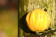 October Originals - A mini pumpkin by Tommy Hammarsten