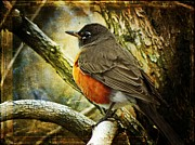 Nature Framed Prints - A Moment for Mother Robin Framed Print by Leah Moore
