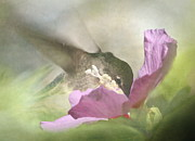Rose Of Sharon Metal Prints - A Moment in the Flower Metal Print by Angie Vogel