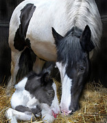 The Horse Mixed Media Posters - A Mothers Way Poster by Carol Cavalaris