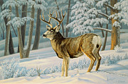 A Nice Buck Print by Paul Krapf