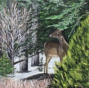 Bush Wildlife Paintings - A Nova Scotia Deer by Donna Muller