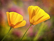 Ca Poppies Prints - A Pair Print by Claudia Kuhn