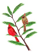 Cardinals Drawings - A Pair of Cardinals by Stephanie Davis