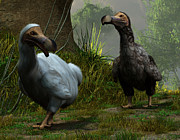 Dodo Bird Posters - A Pair of Dodos Poster by Daniel Eskridge