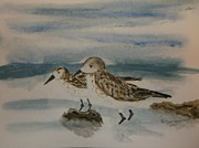 D Whitehurst - A Pair of Sandpipers
